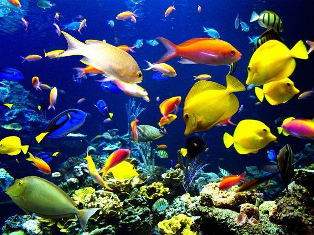 Bể cá thủy sinh mãi đẹp xinh