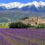 Provence Pháp – ngất ngây trước vẻ đẹp của hoa oải hương