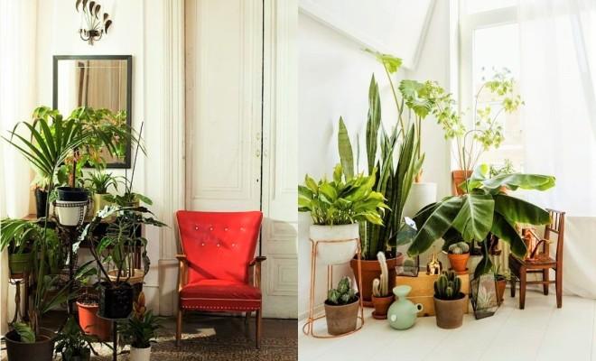 Gợi ý 14 cách trang trí cây cảnh trong nhà