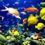 Cách bài trí bể cá theo phong thủy hút tài lộc