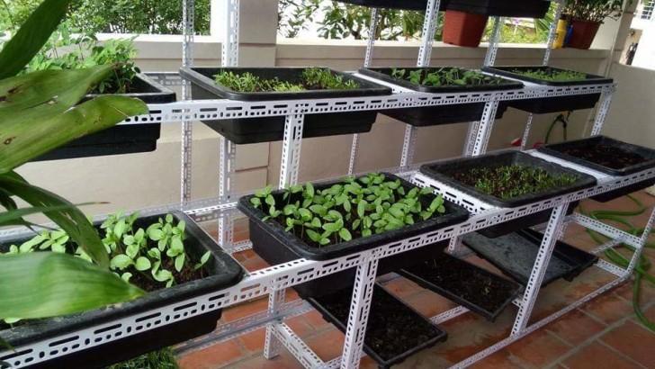 1 triệu đồng làm vườn rau sạch tại nhà