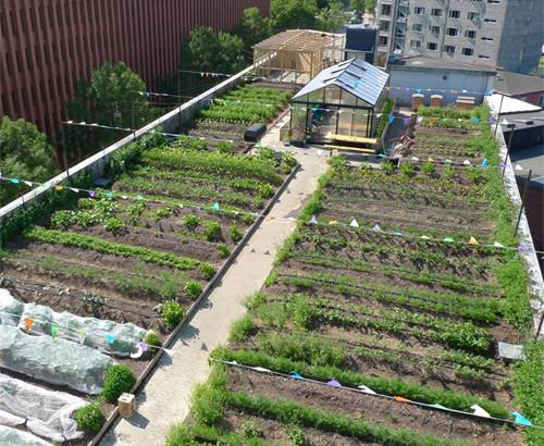Những nông trại bát ngát trên mái nhà