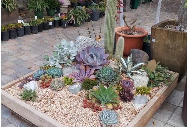 Ý tưởng tạo khu vườn xương rồng sen đá độc đáo tại nhà