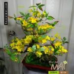 Mai bonsai 60cm 565BM9