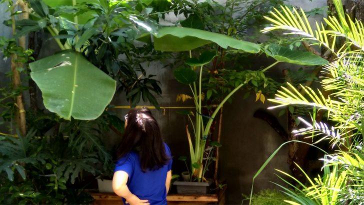 Chia sẻ kinh nghiệm dành cho người mới bắt đầu làm vườn trồng cây và rau tại nhà phố